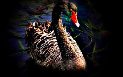 Lezioni di un black swan event